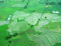 Aerial view of paddy field in Pai, Mae Hong Son, Thaiiland Stock Photography