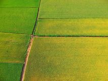 Aerial view of paddy field stock image