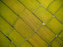 Aerial View of Paddy Field royalty free stock photo
