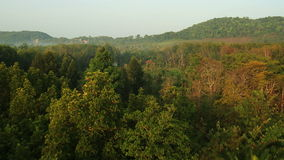 Aerial View. Palm oil plantation in Krabi province, Thailand stock video footage