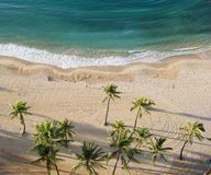 Aerial view of palm tree on the beach. Tropical paradise as view from above.  Deserted beach, white sands, and palm trees Royalty Free Stock Image
