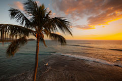 Aerial view of palm tree at sunset Royalty Free Stock Photo