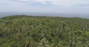 Aerial view of palm trees, sea and sky. Aerial drone view of tropical landscape with palm trees, sea and sky stock video footage