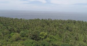 Aerial view of palm trees, sea and sky. Aerial drone view of tropical landscape with palm trees, sea and sky stock video