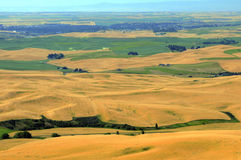 Aerial view of Palouse Royalty Free Stock Photo
