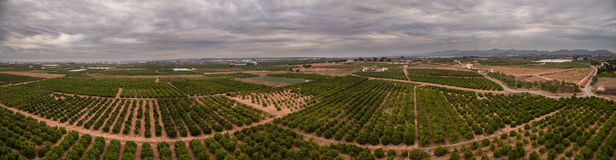 Aerial view panorama of orange fields in Valencia Stock Photo