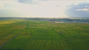 Aerial view panoramic beautiful green rice fields. Against trees sky with clouds and water on horizon stock footage
