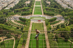 Aerial view of Paris architecture from the Eiffel tower. Royalty Free Stock Image