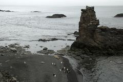 Aerial view of penguins and elephant seals on beach royalty free stock photo