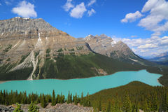 Aerial view of Peyto Lake in Banff National Park, Alberta, Canada Royalty Free Stock Photo