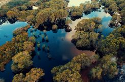 Aerial View Photography of Green Leaf Trees Surrounded by Body of Water at Daytime stock photography