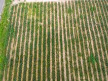 Aerial view pine apple plantation background Stock Images