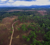 Aerial view of pine forest in northern of thailand Royalty Free Stock Images