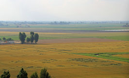 Aerial view of the plain with the cultivated fields and crops stock photo