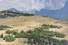 Aerial View of Plains between Pine Forests in Rocky Mountains Royalty Free Stock Photo
