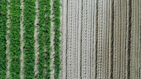 Aerial view of plantation field stock footage