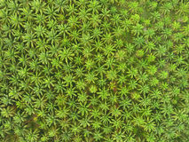 Aerial view on plantation of palm trees. Aerial top view on plantation of palm trees background Royalty Free Stock Images