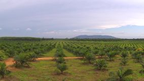 Aerial view of plantation in Thailand stock footage