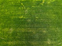 Aerial view green field in the countryside. Photo from the drone stock image