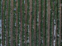 Aerial view of the planting royalty free stock image