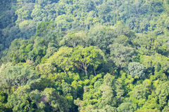 Aerial view of plentifully forest ,Thailand. Aerial view of  plentifully tropical rain forest in Thailand Royalty Free Stock Photos