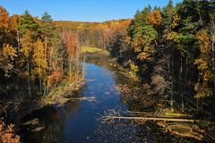 Aerial view of the pond and the bright yellow forest is reflect royalty free stock photography