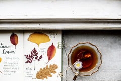 Aerial view of pressed leaves collection book with tea cup Stock Photography