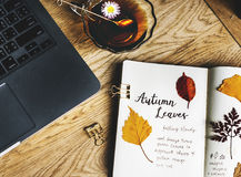 Aerial view of pressed leaves collection book with tea cup Stock Image