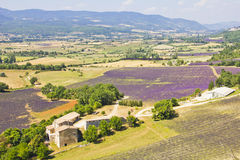Aerial view of Provence and the lavender fields Royalty Free Stock Image
