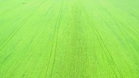 Green grass football field from the top aerial view. 4K. stock footage