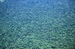 Aerial view of rainforest in Argentina and Brazil Royalty Free Stock Image