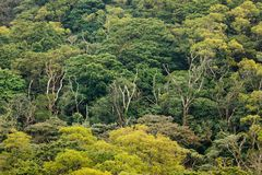 Aerial view of rainforest canopy Royalty Free Stock Images