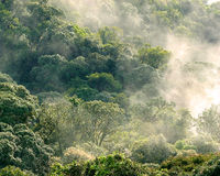 Aerial view of rainforest with mist and sunlight  in the morning Royalty Free Stock Photography