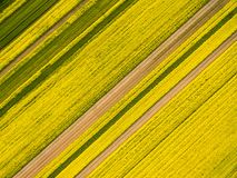 Aerial view of rapeseed flower field in spring. Abstract natural texture background Royalty Free Stock Images