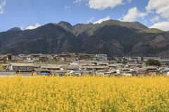 Aerial view of rapeseed flowers around ShiGu village near Lijiang . ShiGu is in Yunnan, China, and was part of the South Silk Road Royalty Free Stock Photography