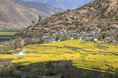 Aerial view of rapeseed flowers around ShiGu village near Lijiang . ShiGu is in Yunnan, China, and was part of the South Silk Road Royalty Free Stock Images