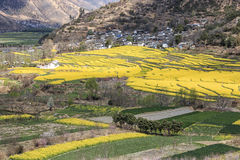 Aerial view of rapeseed flowers around ShiGu village near Lijiang . ShiGu is in Yunnan, China, and was part of the South Silk Road Royalty Free Stock Image