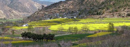 Aerial view of rapeseed flowers around ShiGu village near Lijiang . ShiGu is in Yunnan, China, and was part of the South Silk Road Stock Images