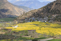 Aerial view of rapeseed flowers around ShiGu village near Lijiang . ShiGu is in Yunnan, China, and was part of the South Silk Road. Or ChaMa GuDao Stock Photos