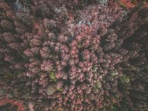 Aerial view of red spruce forest Stock Photos