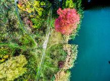 Aerial view - red tree on a meadow Royalty Free Stock Photography
