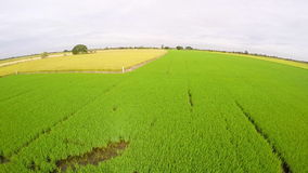 Aerial view of rice field and yellow rice field,Thailand stock video