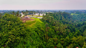 Aerial view of the rice fields through the jungle. Bali, Indonesia stock photography