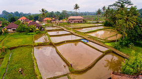 Aerial view of the rice fields through the jungle. Bali, Indonesia royalty free stock photo