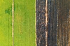 Aerial view, rice fields and rows of soil before plant. At Thialand stock photography