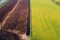 Aerial view, rice fields and rows of soil before plant. At Thialand royalty free stock photos