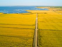 Aerial View of Rice Fields Royalty Free Stock Photo