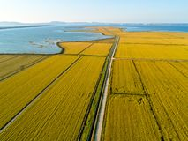 Aerial View of Rice Fields Stock Images