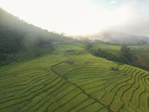Aerial view of the rice filed from drone Royalty Free Stock Images