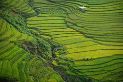 Aerial View of Rice Paddy Stock Images